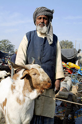 An old Muslim man with his goat on Bakr-Id Festival where sacrificial offerings is marked by the slaughter of animals at Jama Masjid   ,    Delhi   ,    India